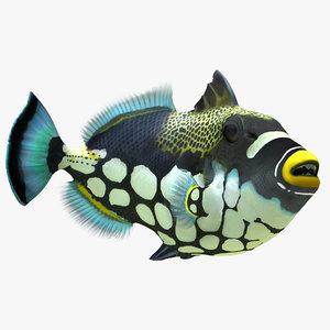 max clown trigger fish rigged