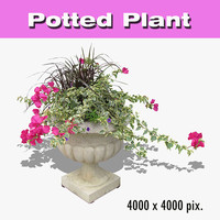 Potted Plant 01