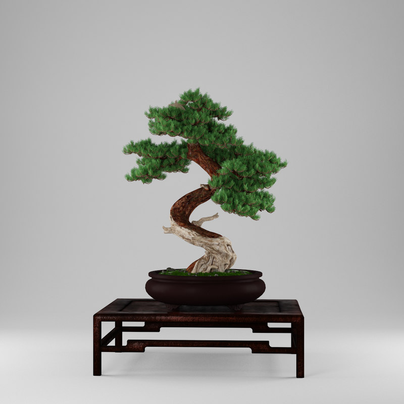 bonsai juniperus 3d max
