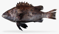 3ds max giant sea bass