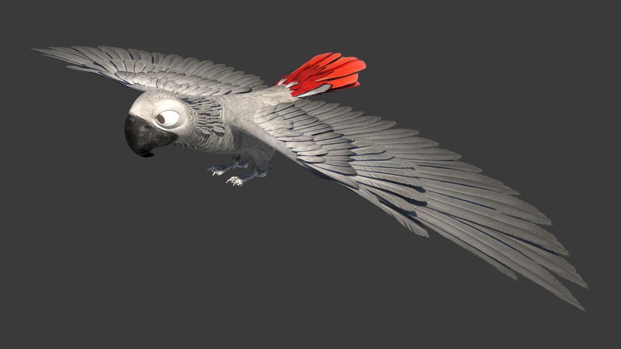 3d ma gray parrot