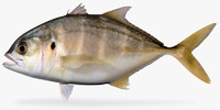 3d model of pacific crevalle jack