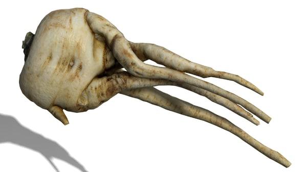 3d celery root model