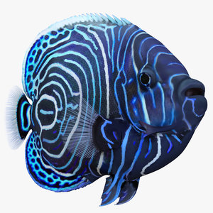 juvenile emperor angelfish 3d model