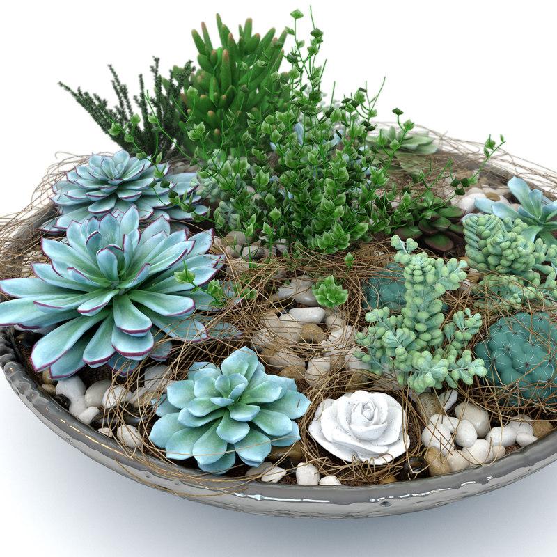 composition plant succulents max