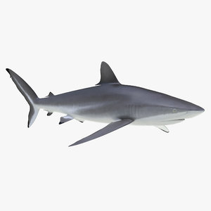 silky shark 3d max