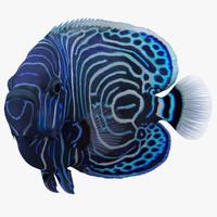 3dsmax juvenile emperor angelfish pose