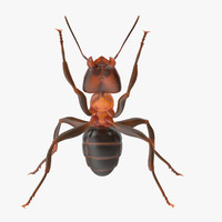 ant holding pose 3d model