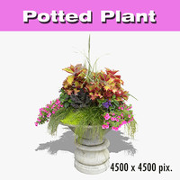 Potted Plant 25