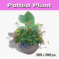 Potted Plant 26