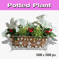 Potted Plant 32