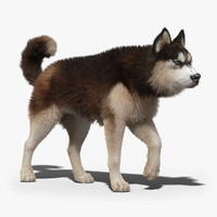 Siberian Husky(2)(FUR)(ANIMATED)