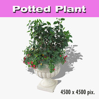 Potted Plant 33