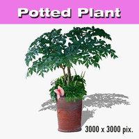 Potted Plant 36