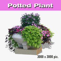 Potted Plant 39