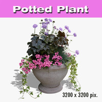 Potted Plant 41