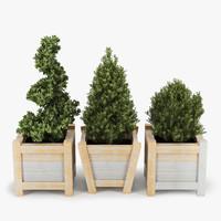 max bush plant