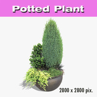Potted Plant 51