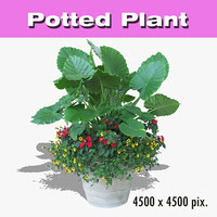 Potted Plant 52
