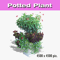 Potted Plant 53