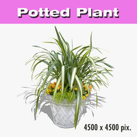 Potted Plant 56