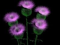 3d thistle flower model