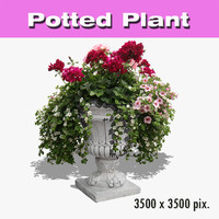 Potted Plant 65