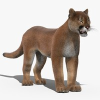 3d cougar fur
