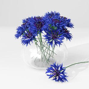cornflower flower plant 3d model