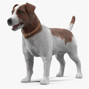 jack russell 3d model