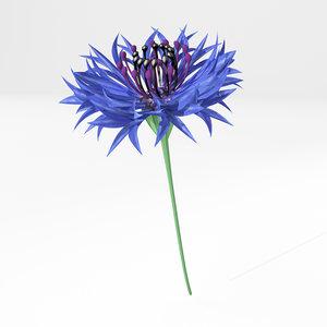 3dsmax cornflower flover plant