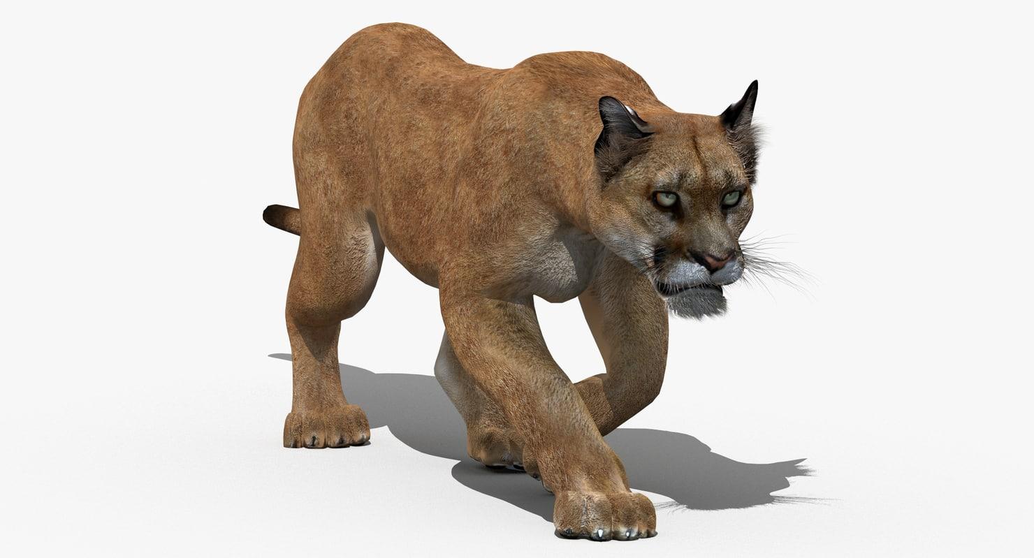 3d model puma animation cat