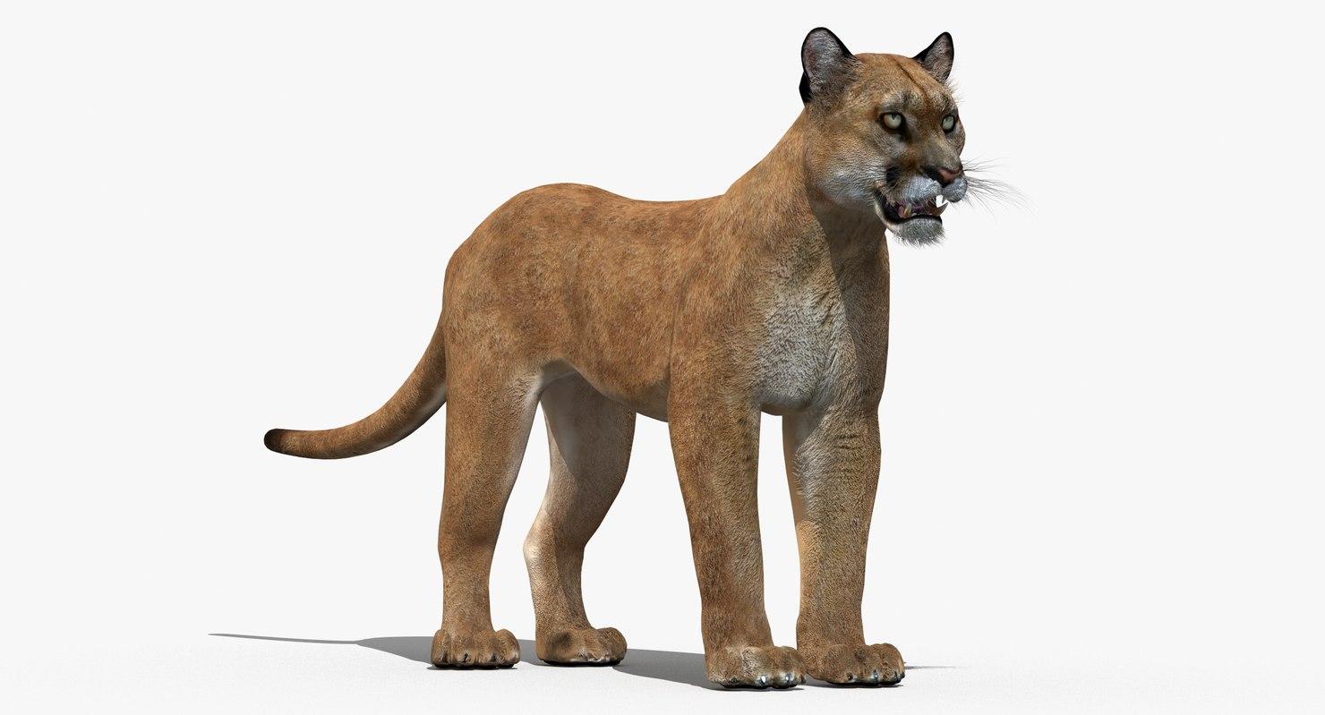 puma cat feline max