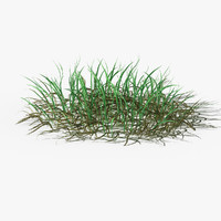 3d model of grass corona-rendering