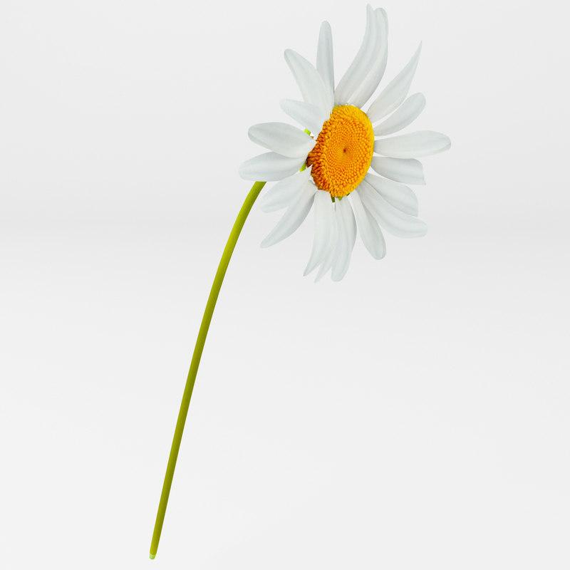 daisie flower plant 3d max