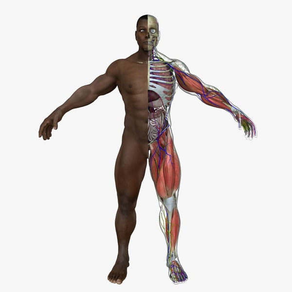 ultimate complete male anatomy ma
