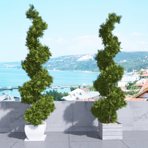 3d thuja plicata 001 tree model