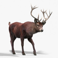 3d model red deer stag 2