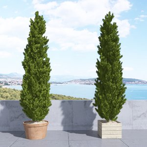 3d max thuja plicata 002 tree