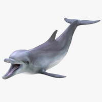 dolphin pose 3 3d 3ds