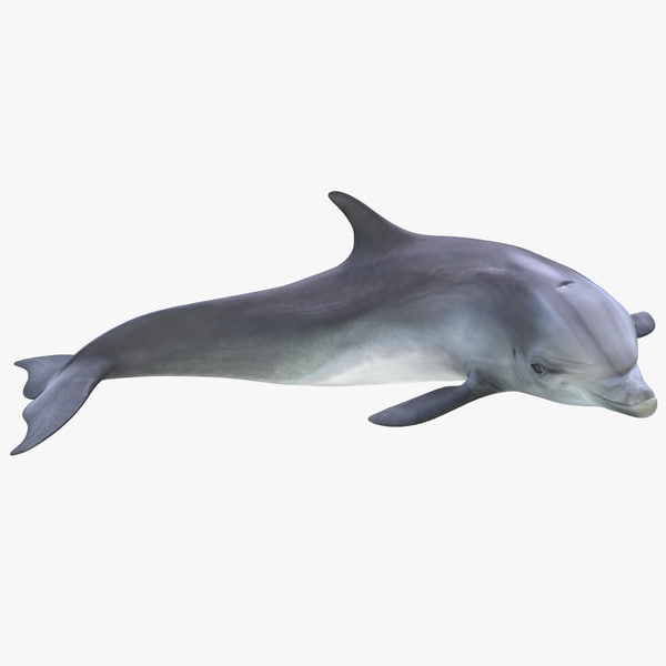 3ds dolphin pose 4