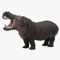 hippopotamus hippo mammal animal 3ds