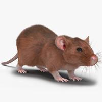 3d rat 2 model