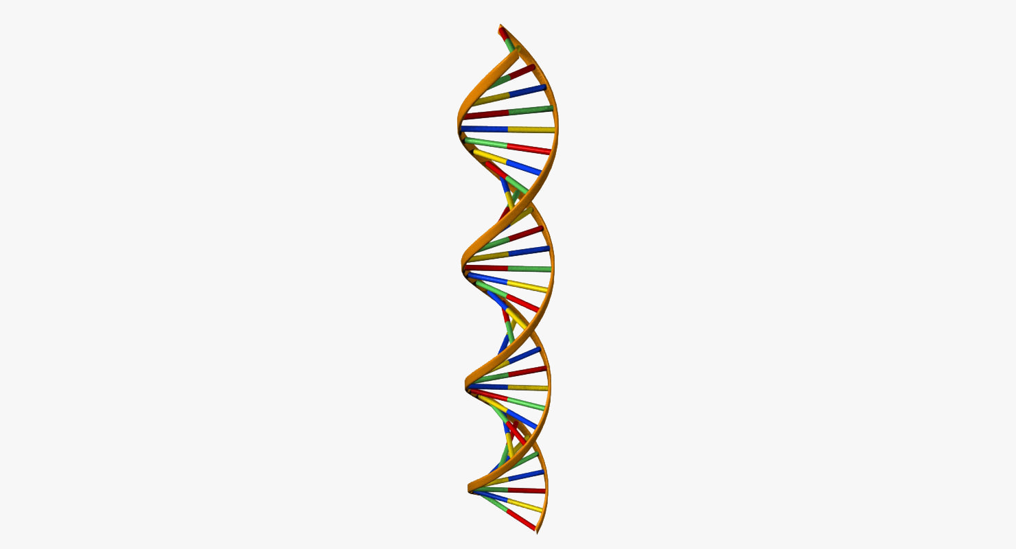 dna double helix model pdf