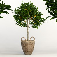 3d lemon tree model