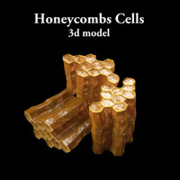 Honey Comb`s Cell