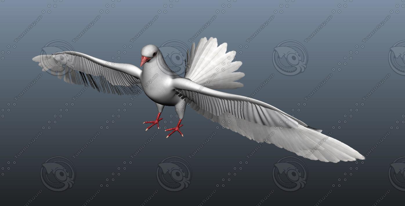 pigeon ma