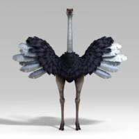 max ostrich