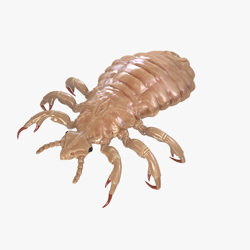 3d model hair louse