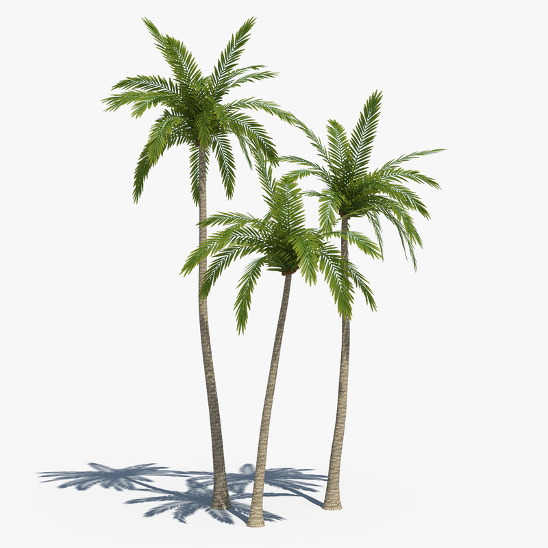 coconut palms 01 3d obj